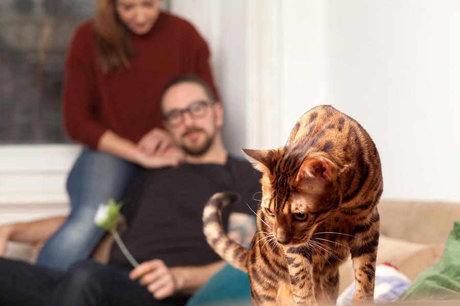 Familienfotografin Fotostudio Homeshoot Katzen Tierfotografie